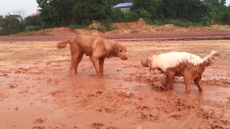 Собачки поигрались в грязи