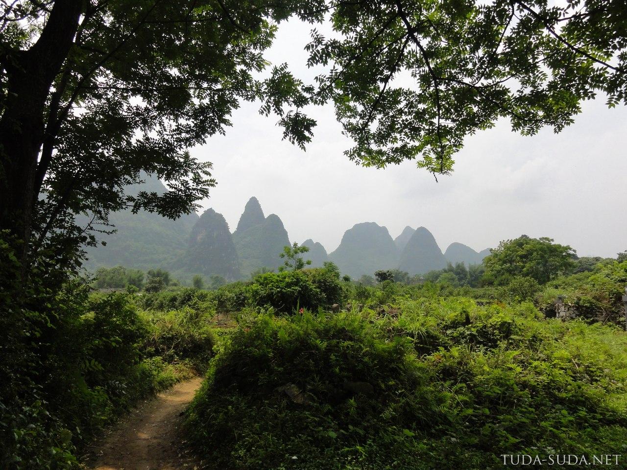 Фруктовые деревья Китай