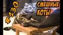 Смешные коты ДО СЛЁЗ Кошки Приколы С Котами и Кошками 2018 Funny Cats