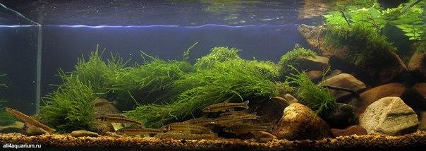 Конкурс дизайна биотопных аквариумов JBL 2014 N03veSkn_Os