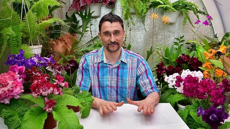 Ответы на вопросы о поливе растений. Часть 1