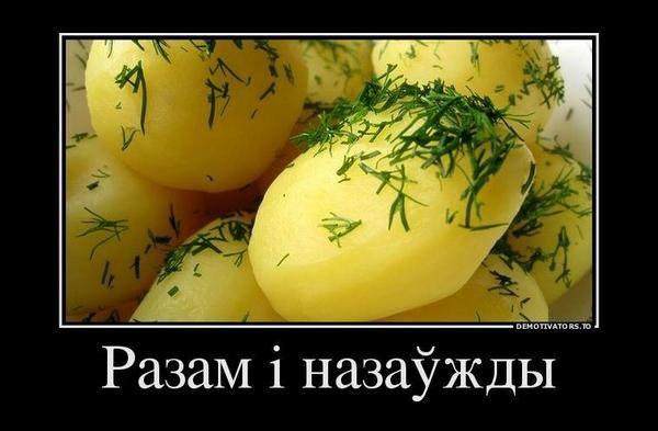 Симоненко провел съезд  КПУ в Минске - Цензор.НЕТ 6560