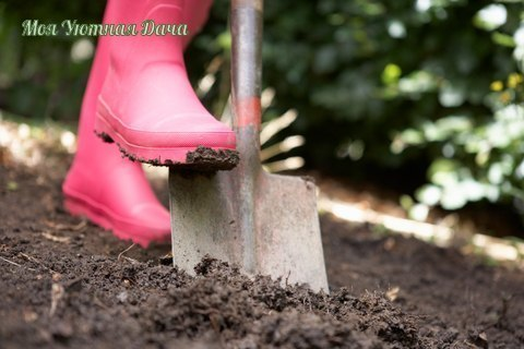ЧЕТЫРЕ ПРИЧИНЫ, ПО КОТОРЫМ ПЕРЕКОПКА ВРЕДИТ ПОЧВЕ 1.Погибают микроорганизмы и дождевые черви. Почва становится мертвой, теряет плодородие.2.Разрушается структура почвы. Такую почву смывают дожди