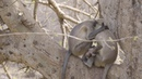 Heartbreaking Moment Grieving Mother Monkey Won't Leave Infant's Side