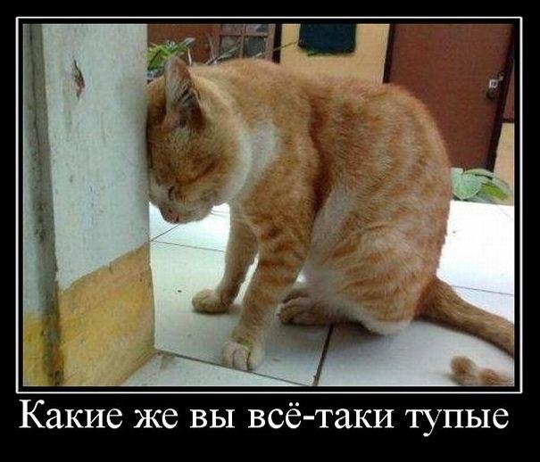 Храм Венеры лучший сайт россии по продаже электрошокеров сказать