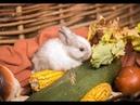 Осенний фотопроект в фотостудии Белый Кот , с крольчатами