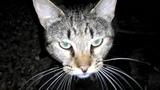 Дворовый кот дегустирует ветчину