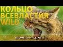 Кольцо Всевластия Wild на дикой природе National Geographic гравировка на древнем эльфийском языке
