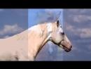 ▶ КОНЬ Выйду ночью в поле с конем Хор Сретенского монастыря
