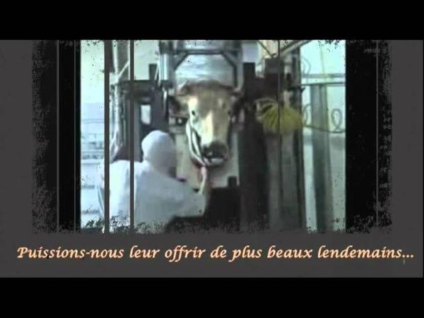 OMNE DATUM OPTIMUM - Les Moissons Ecarlates (officiel)