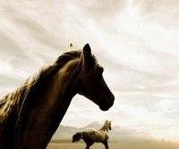 Широкоформатные обои Лошадь рвется к облакам, Головы лошадей на фоне облаков.
