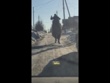 Новосибирская область. Погонщик верблюда в Бердске.1