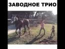 СТАВИМ МНОГО ЛАЙКОВ - танцующей лошадке. Милоту вам в ленту