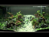 Aquascaping - Qualifyings for The Art of the Planted Aquarium 2015, region North, XL tanks, part 2