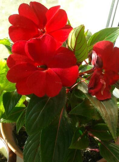 Цветы у Ликки RgmTaoR9lQs