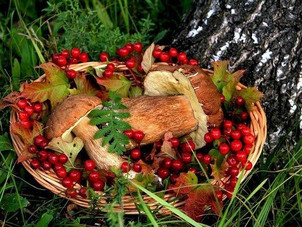 Autumn time ... - Pagina 2 FHZ16Z3OROY