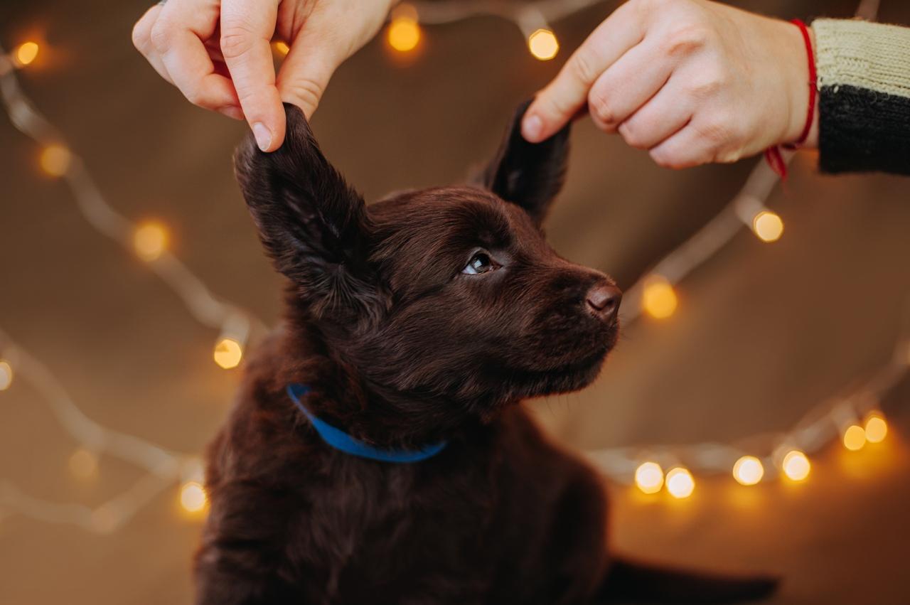 вас бизнес правила фотосъемки щенков помогут