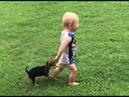 Vídeo engraçado cachorros brincando com bebês RISO GERAL