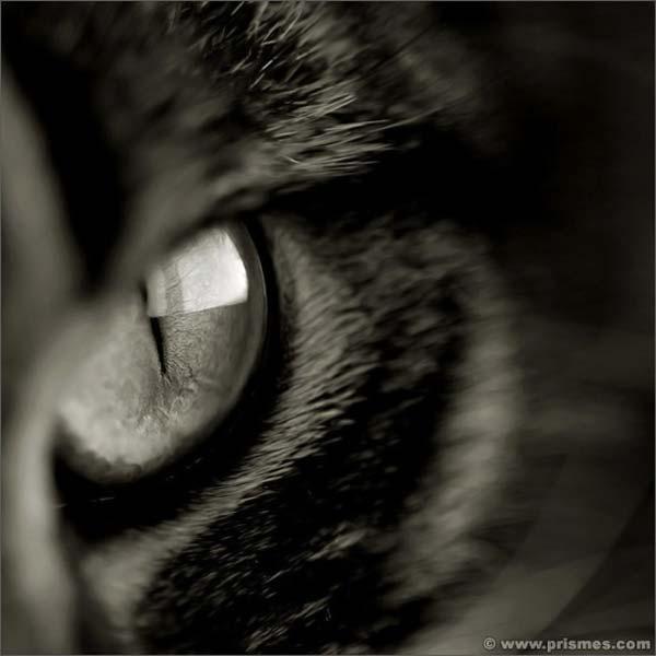 красивое фото на аватарку:
