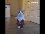 Модные котики