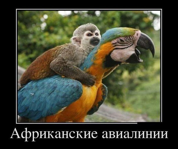 https://pp.vk.me/c635103/v635103906/57c1/vlbYndqWWwc.jpg