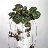 чернаямагия - Магия растений. Магические свойства растений. Обряды и ритуалы. Амулеты и талисманы из растений.  Hz_5HYNyaS0