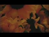 G-Eazy &amp Halsey - Him &amp I (Official Video) ( 480 X 854 ).mp4