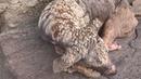 Dog with skin like cracked stone. Amazing transformation