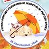Помощь бездомным животным города Орска