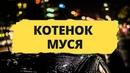 КОТЕНОК МУСЯ /К БАРЬЕРУ/