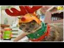 Смешное видео про животных, приколы про животных до слез.