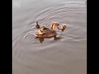 Мамы и их маленькие разбойники