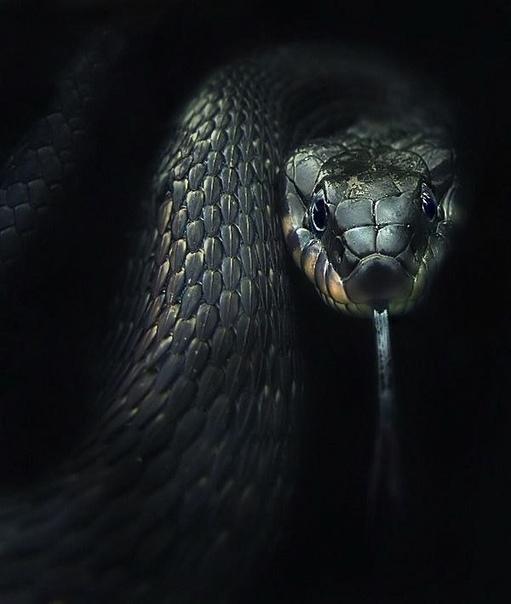 как однажды мне в Китае пришлось съесть самую настоящую змею:) Нет, меня никто не заставлял, самому было интересно. Почему, не знаю. Я не представлял сногсшибательного вкуса или что-то там