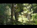 В лес да по ягодицы