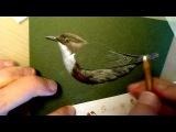 Оляпка. Speed painting. Часть 1