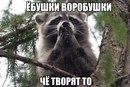 Тоха Хохлов фото #2