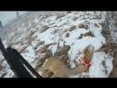 Охота на косулю 2018. Загонная охота. Охота на лису из под собаки. Лось вышел прямо на номер.