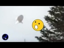 Bizarre shaped UFO sighted in the sky over Quebec,Canada! Nov 9,2018
