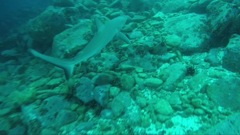 Дайвинг с акулами на Галапагосах