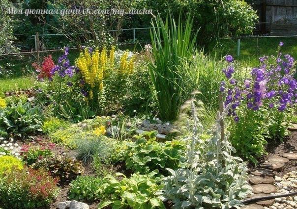 6 ЛУЧШИХ ОРГАНИЧЕСКИХ УДОБРЕНИЙ ДЛЯ ЦВЕТНИКА При выращивании цветов многолетников пользуются органическими и минеральными удобрениями. Органические содержат все необходимые для растений