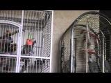 попугай Григорий с женой Ксюшей)) разговаривают - 2014 год (видео № 8)