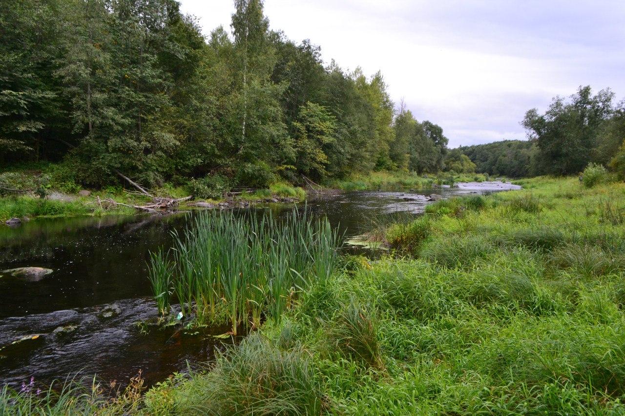 Реки Ленинградской области. 15 красивых фото.