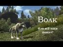 В мире животных Готики Gothic 3 / Волк