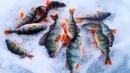 Глухозимье РЫБАЛКА на озере КАРБАТ Белый Яр ЛОВЛЯ Окуня на ПИКУЛЯ