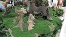 Москва м Киевская Торговый центр Европейский Зов природы