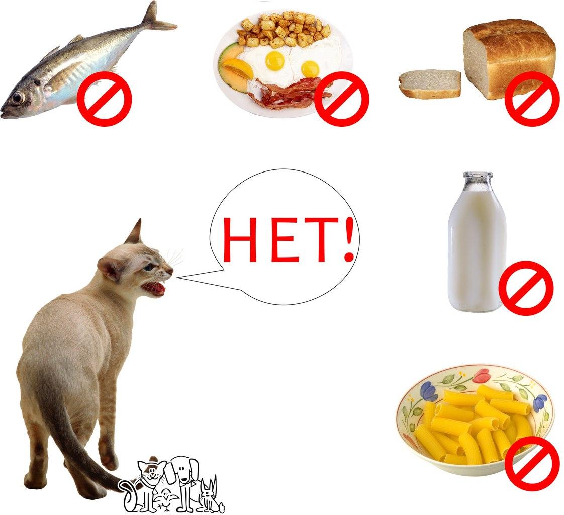 Чем кормить кошку в домашних условиях натуральной едой список