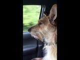 Our Dog loves Cape Breton Island