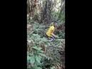 A única reação possível após cair de uma árvore de 5 metros