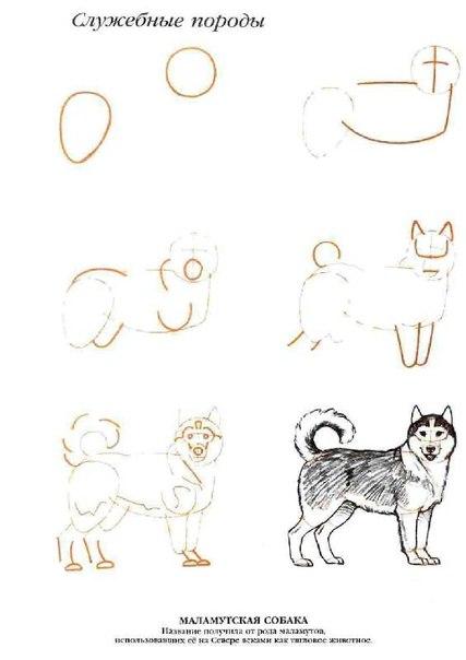 Как нарисовать лайку