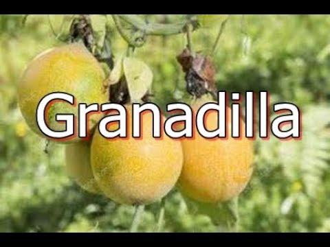 La Granadilla Passiflora ligularis es una planta trepadora